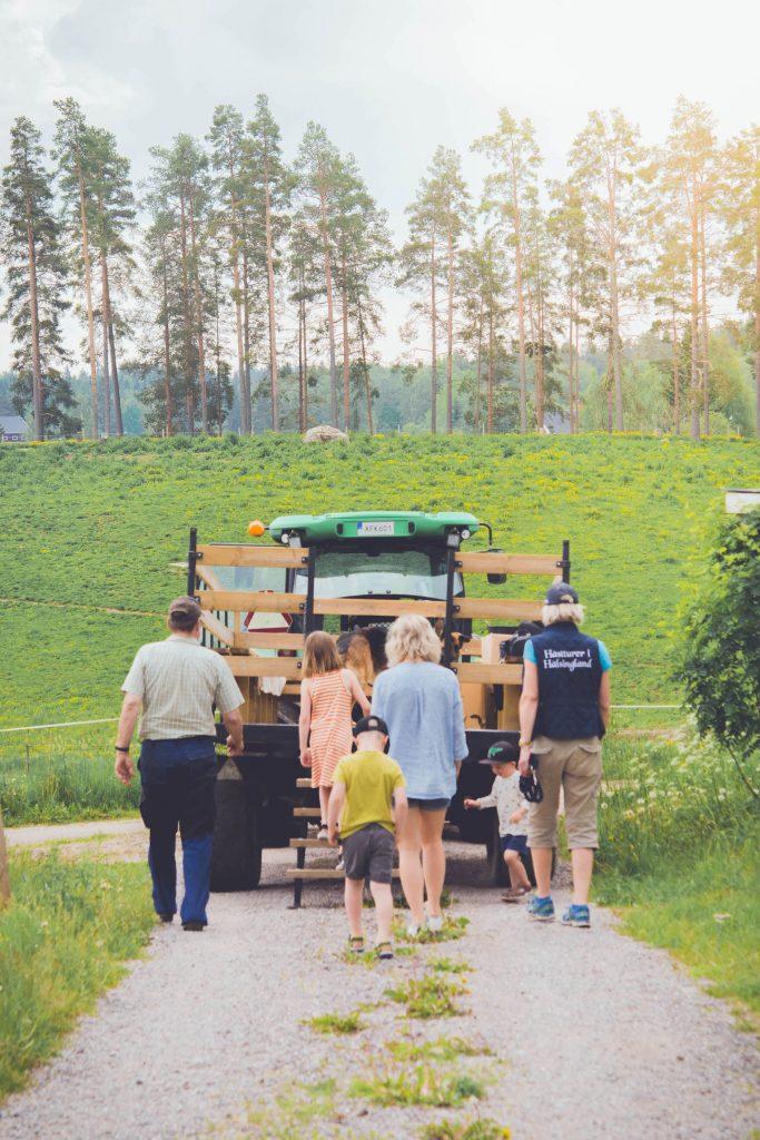 Dags att hoppa upp i vagnen bakom traktorn för att åka ut i kohagen