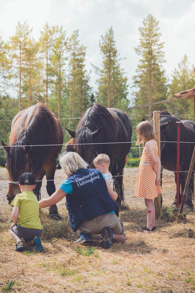 Barnen matar hästarna tillsammans med Dianal som har gården